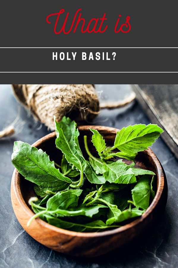 What is holy basil. What does holy basil look like. How to buy the correct kind of basil for Thai basil chicken recipe. How to identify holy basil.