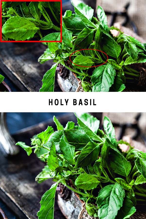 What does holy basil look like