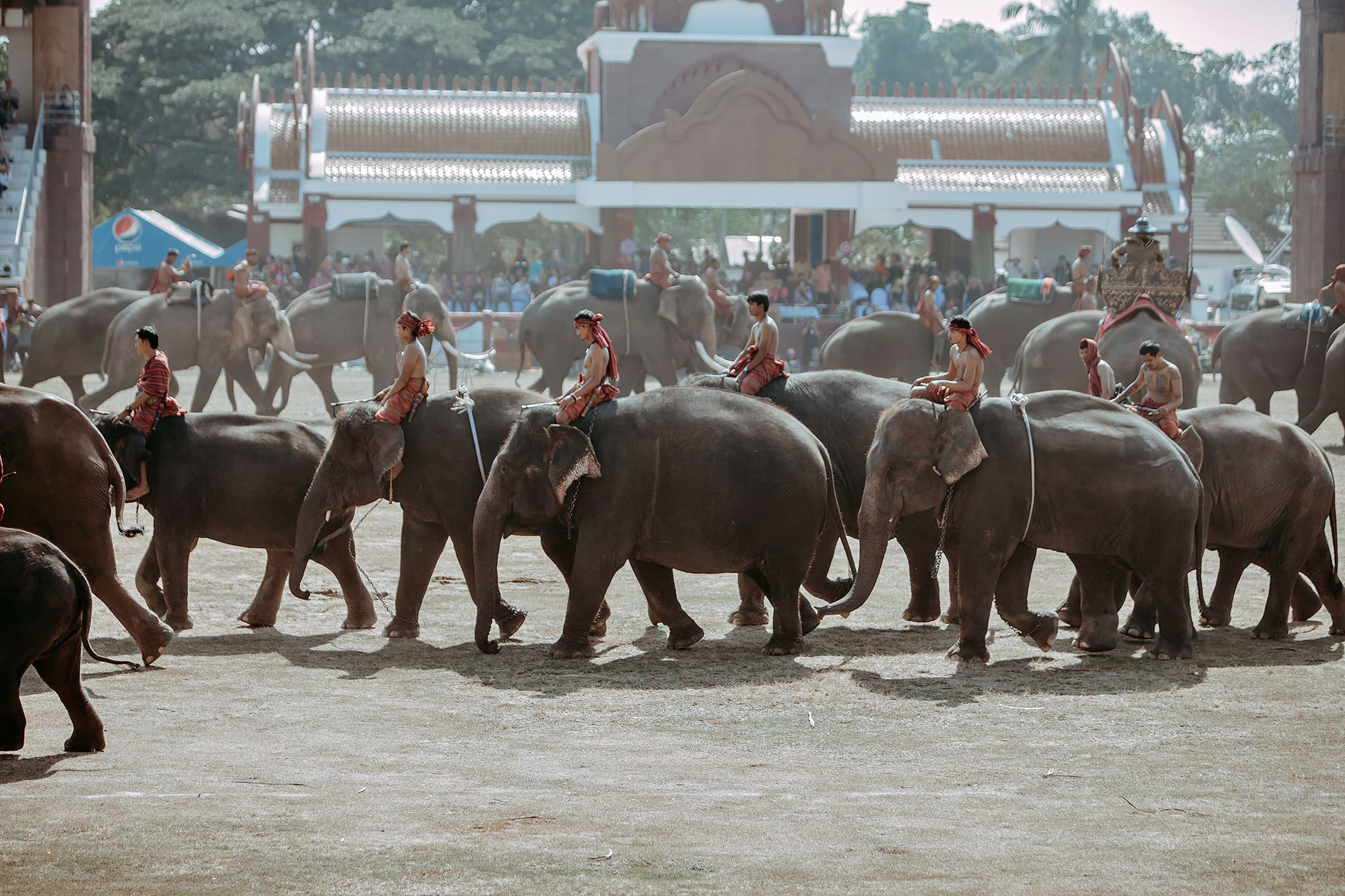 Surin Elephant Round up Festival